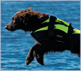 Pet buoyancy
